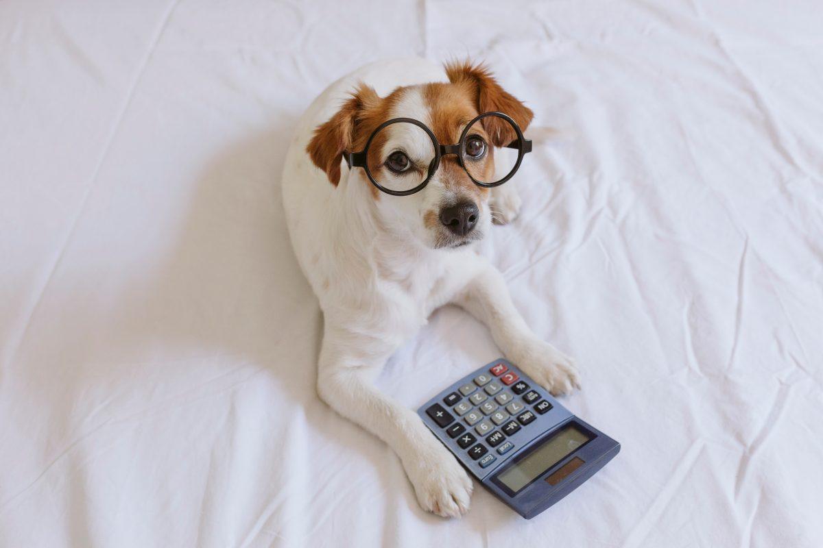 dog calculator 2