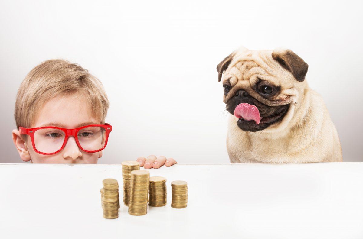 dog kid money